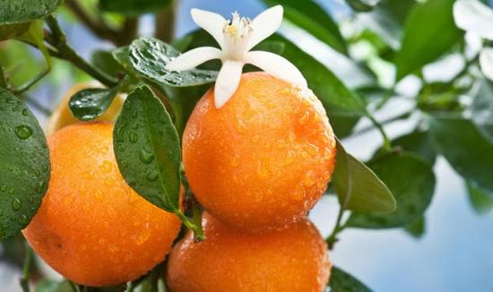 Интересное про апельсины