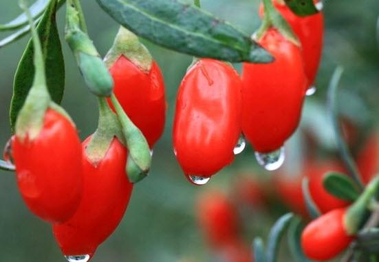 Ягода годжи - вся правда о ягоде