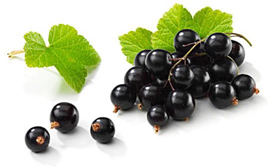 Черная смородина - очень полезная ягода