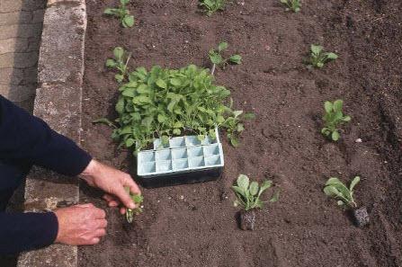Время сажать овощи