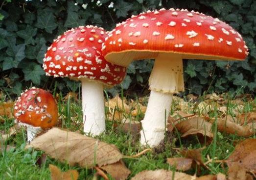 Про ядовитые грибы