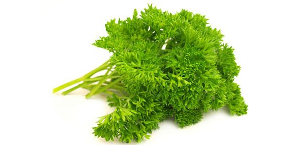 Кервель: лекарственное растение или пряность