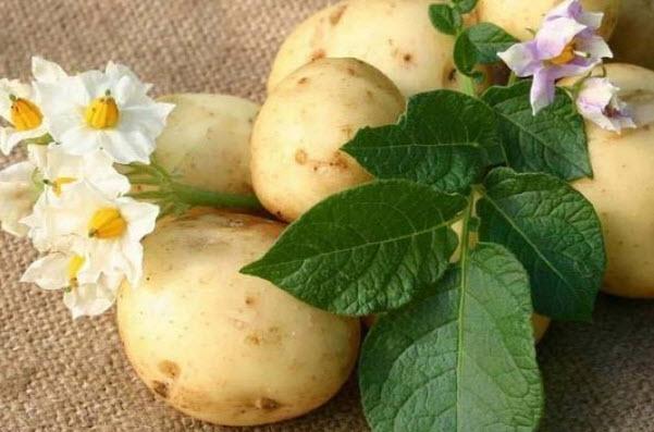 Картофель - польза и вред