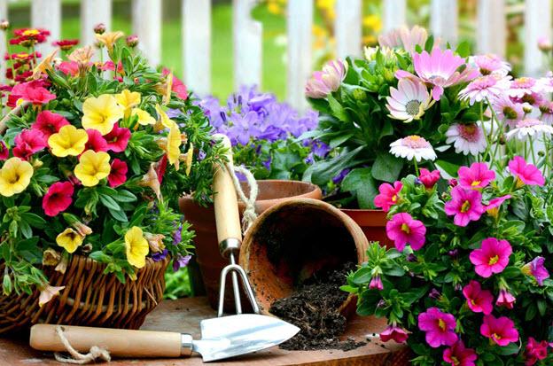Самые полезные цветы