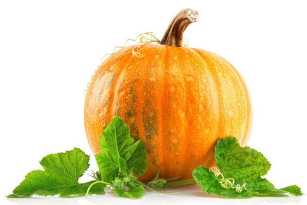 Польза и лечебные свойства тыквы