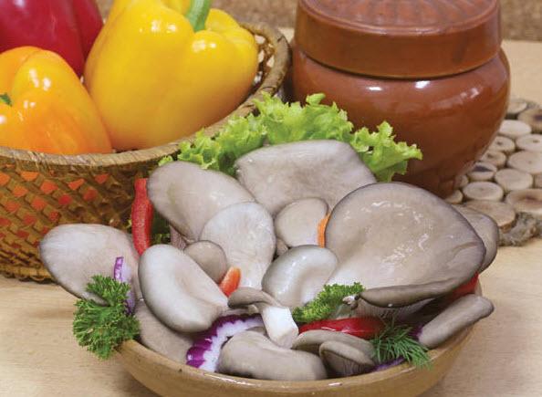 Грибы вешенки или устричные грибы