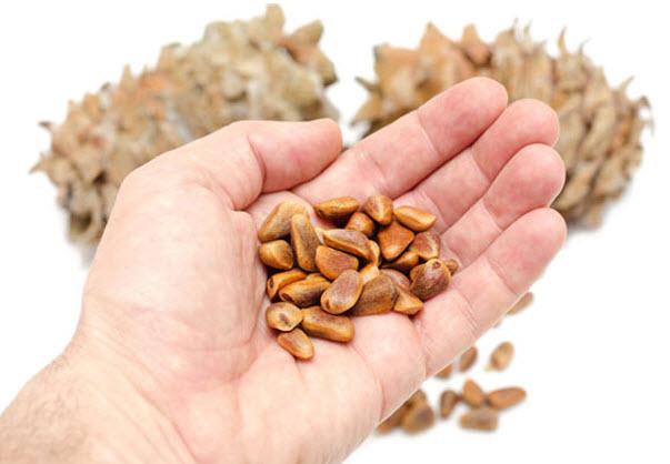 Лечебные свойства кедровых орешек