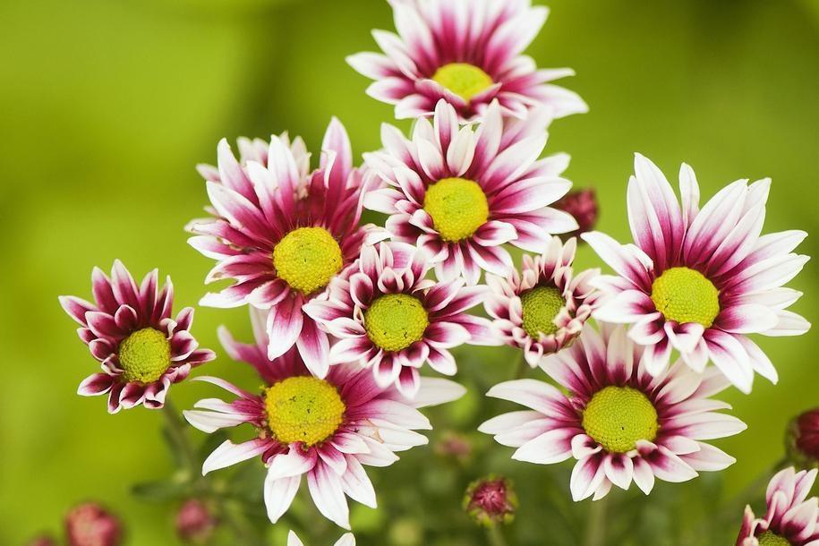 Самые красивые почвопокровные цветы и растения в саду