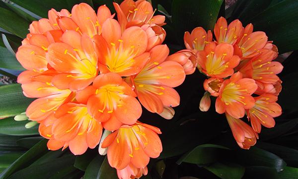 Любящие тень комнатные цветы