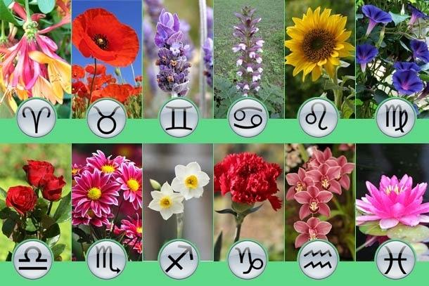 Цветы для квартиры по знакам зодиака