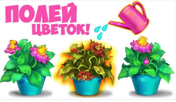 Поливаем комнатные цветы