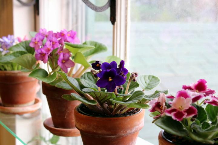Цветы полезные для кухни