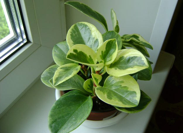 Какой вред могут нанести домашние растения