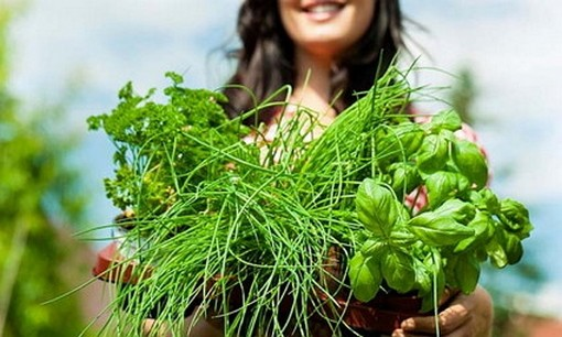 Лучшие травы для здоровья почек