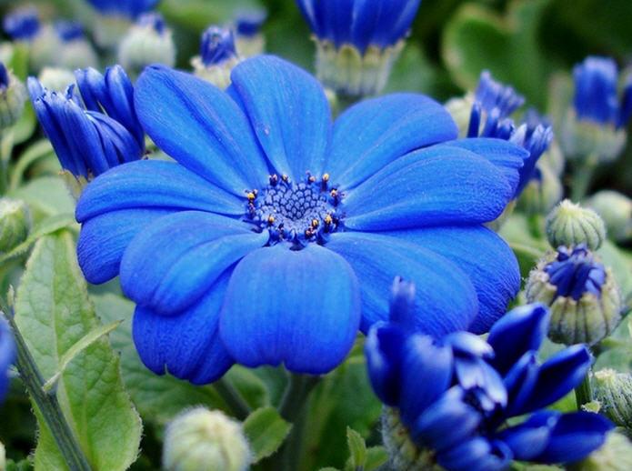 Самые популярные садовые цветы