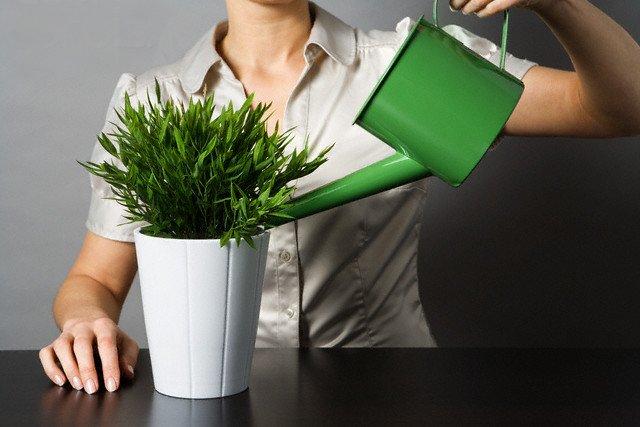 Как уберечь комнатные цветы на время отпуска