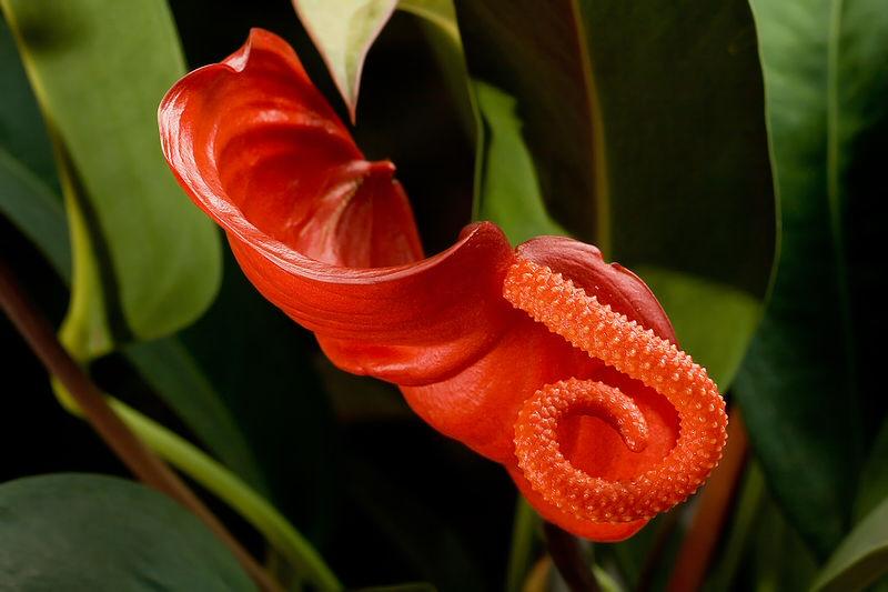 Вредные домашние цветы