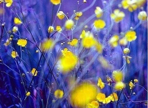 Цветы любящие солнцепёк