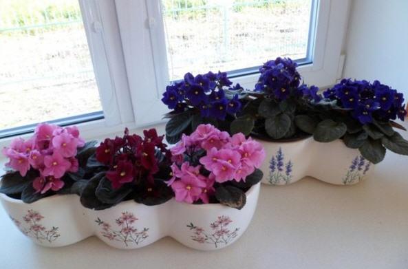 Комнатные цветы для северной стороны окна