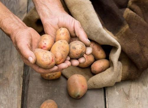 Ошибки при хранении картофеля