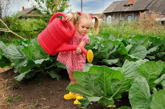 Как правильно выращивать рассаду капусты