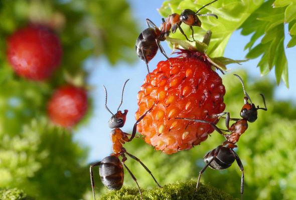 Как избавиться от муравьев на всегда