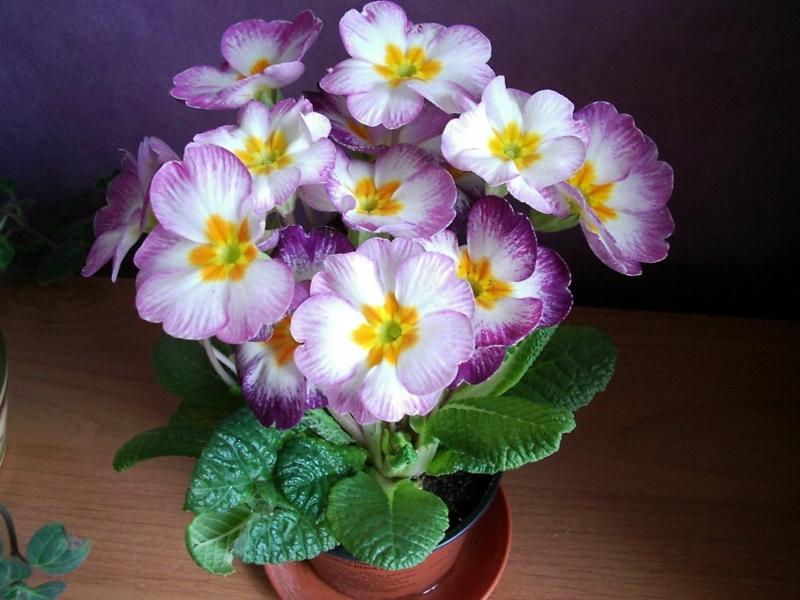Натуральные удобрения для комнатных цветов