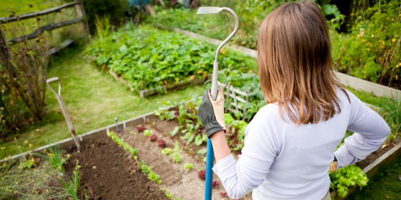 Все о вредителях огородов