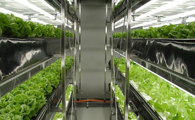 Клонированные растения - что это значит