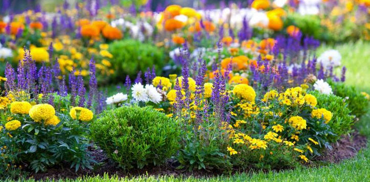 Как ухаживать за цветами многолетниками