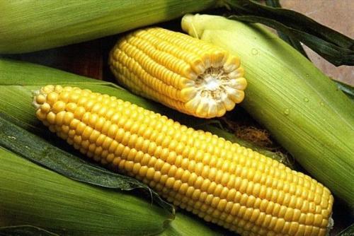 Сбор и заготовка сахарной кукурузы
