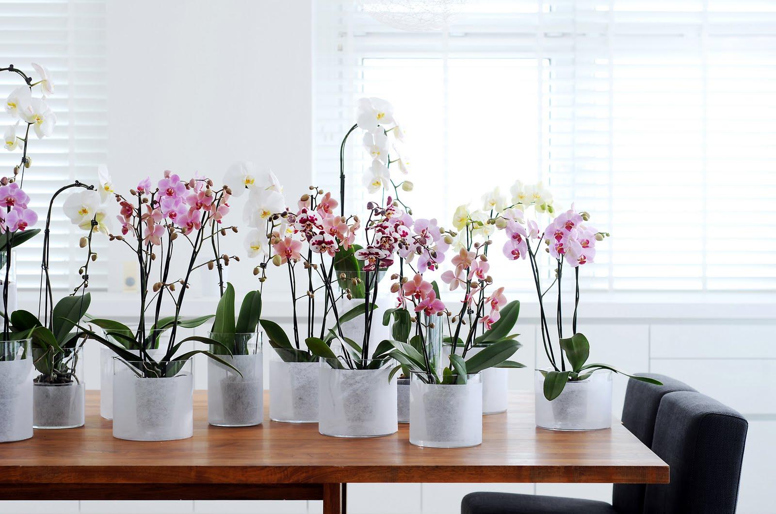 Стоит ли пересаживать орхидею во время цветения