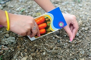 Когда садят морковь