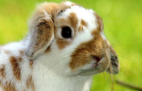 Предупреждение заболеваний кроликов