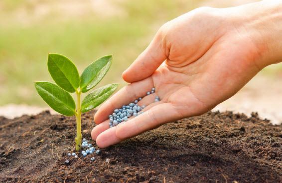 Удобрения для вашего сада