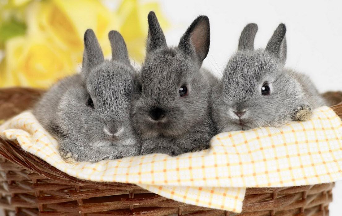кролики в корзинке