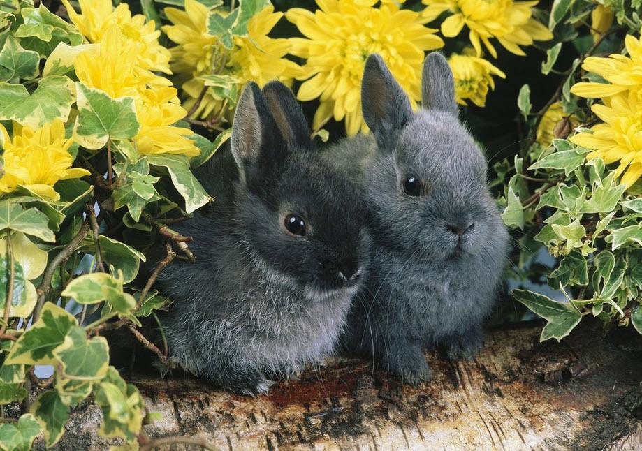 Выгодно ли разведение кроликов