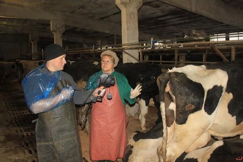 веретинар у коровы