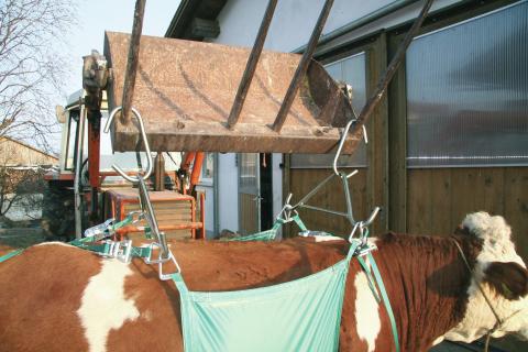 подъемник для коровы