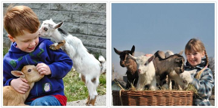 дети и козлята