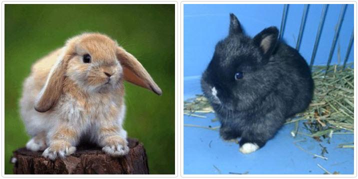 Как отучить кролика грузть клетку