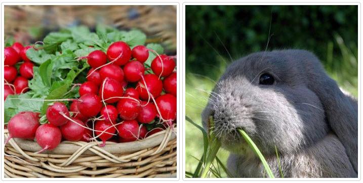 Чем кормить кроликов на ферме