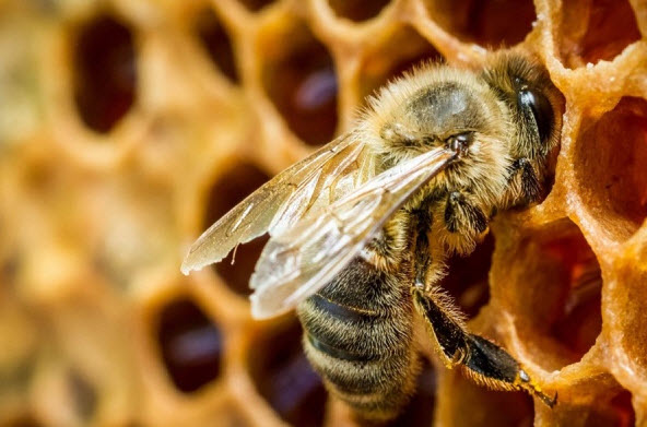 Как стать пчеловодом и приуспеть в этом