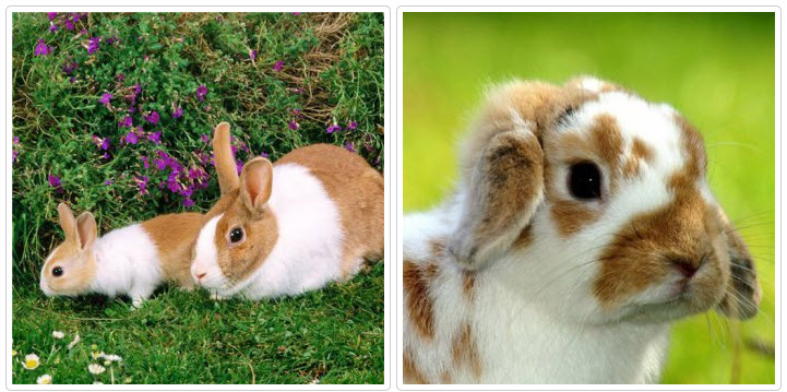 Чем кролик отличается от зайца