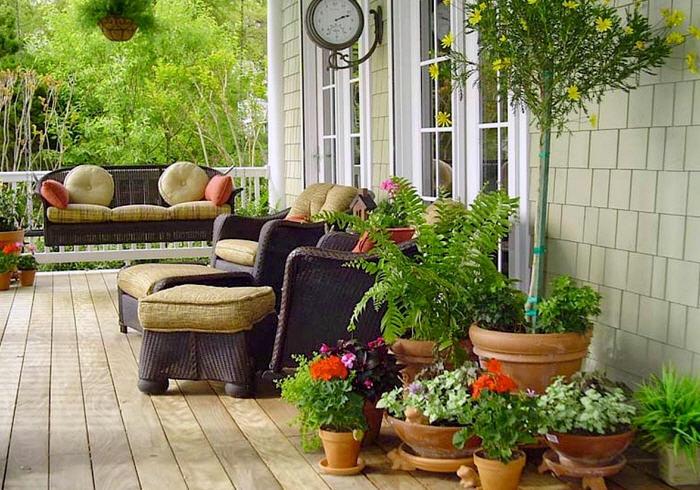 Как выбрать растения для террасы