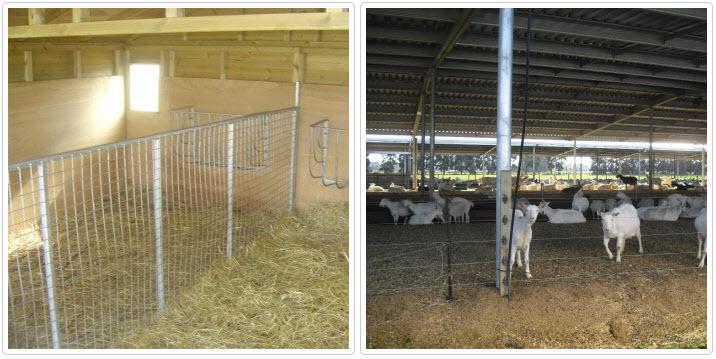 Как построить загон для коз