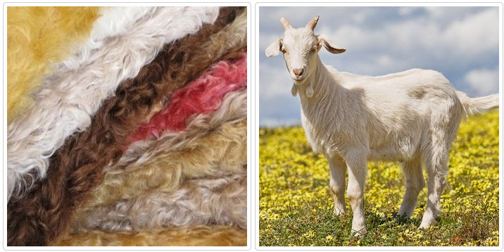 Как ухаживать за шерстью козы