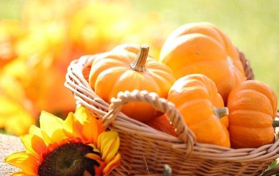Собираем урожай: когда убирать с грядки тыкву, как определить зрелость плода