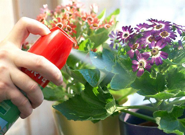 Секреты успешной борьбы с насекомыми, которые вредят комнатным растениям