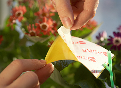Секреты борьбы с насекомыми-вредителями комнатных растений